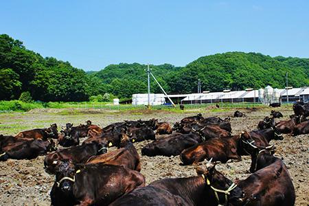ブランド牛の種類
