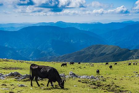 ブランド牛の産地・肥育地